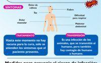 coronavirus Tamaulipas
