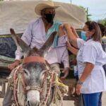 vacunación Tamaulipas